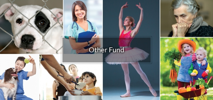 Luzerne Foundation's General Fund